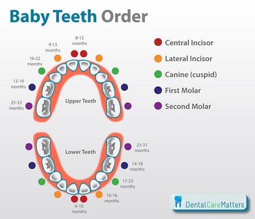 Order that baby teeth emerge